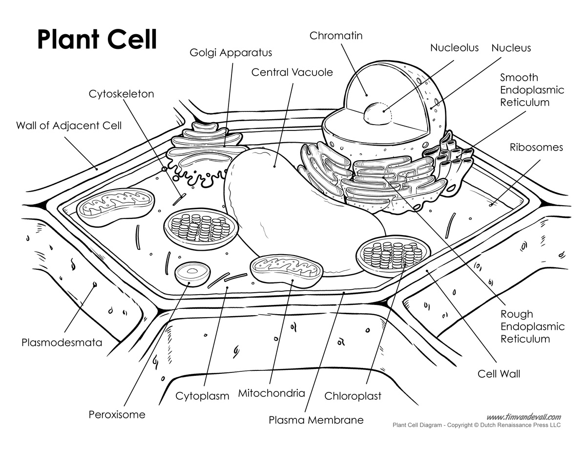 SNC2D Massey Science – Cell Specialization Worksheet